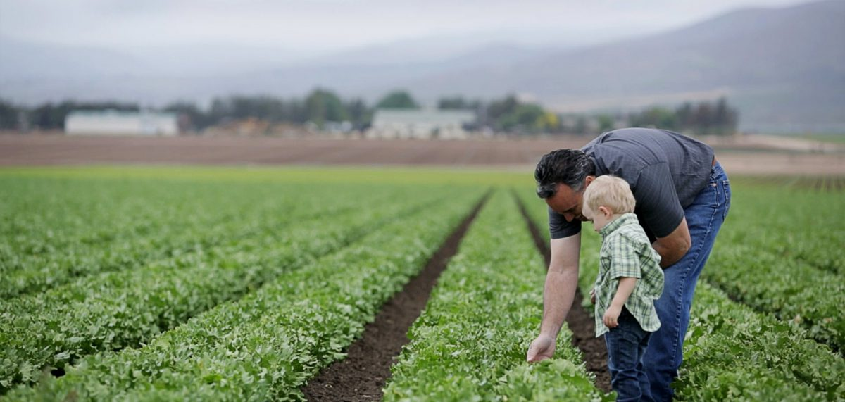 Farmer and son in a agricultural field.
